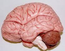 تصویر ده اشتباه که به مغز شما آسیب میزند