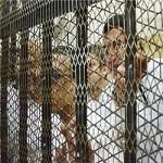 تصویر ۱۰سال حبس برای ۱۶نفر از هواداران مرسی