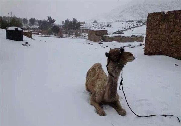 تصویر بارش برف ۱۱۲ ساله در مصر