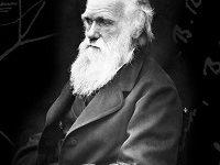 تصویر نقش افکار داروین در نژادپرستی