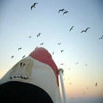 Photo of یک انقلاب، یک کودتا، یک تبرئه… بازگشت کرکس ها به سپهر سیاسی مصر