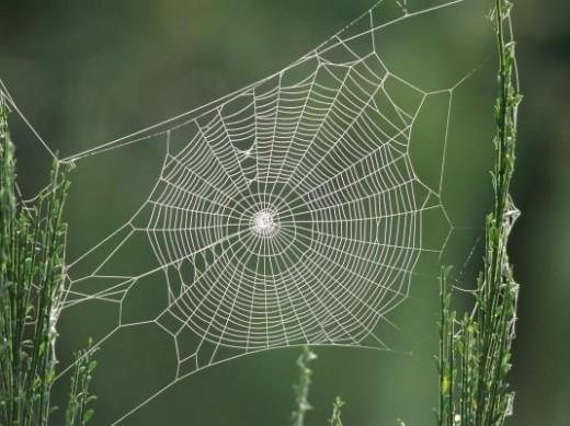 تصویر مقایسه تار عنکبوت با آهن