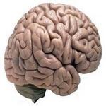 Photo of باورهای غلط رایج در مورد مغز انسان