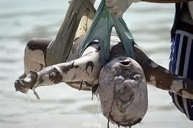 تصویر کمک های ایران و اندونزی برای مسلمانان میانمار